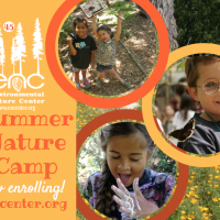 Summer Nature Camp