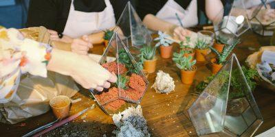 Casa Wellness: Summer Terrarium Workshop