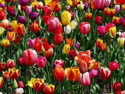 Global Spring Festival