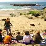 Learn to Watercolor on the Beach, Tour Tidepools