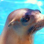 View Live Sea Lions - Learn to Paint - Laguna Beach