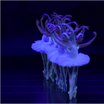 Festival Ballet Theatre's Swan Lake