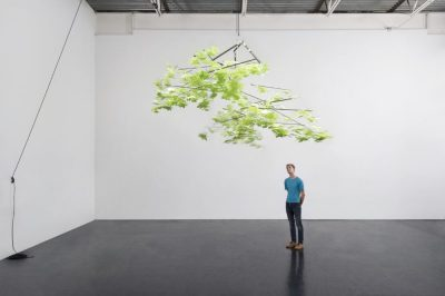 """Sharon Levy's """"Canopy"""""""