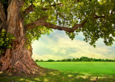 Celebrate Arbor Day @ Pretend City