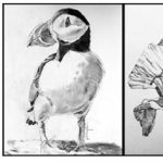 Arts and Community Free Drawing Classes