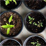 Virtual Casa Conversations: Urban Gardening