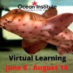 Virtual Ocean Learning with Ocean Institute