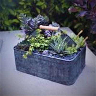 Virtual Gardening - Succulents with Sarah Smith