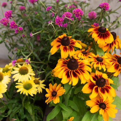 Gardening Tips LIVE with Roger's Gardens!