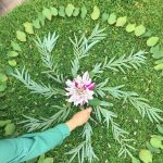 Floral Mandalas at Sherman Gardens