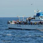 Dana Wharf & Sportfishing