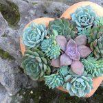 Succulent Heart Class at Sherman Gardens