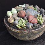 Succulent Stones Class