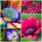 Photography Class: Flower Close-Ups