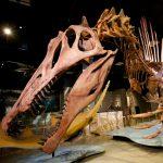 Nat Geo Live: Reimagining Dinosaurs
