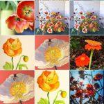 "Join LOCA Instagram Challenge ""Spring Flowers"""