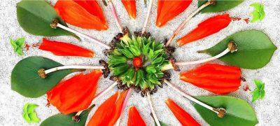 Nature Mandala Workshop