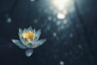 Hatha Flow Yoga & Soundscapes