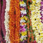 Floral Class:  Lei Day at Sherman Gardens