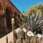 Mission SJC:  Cactus Pastel Art