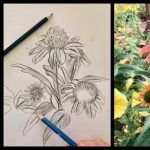 Sherman Afterschool:  Introduction to Drawing