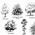 Laguna Beach:  Drawing & Sketching Trees