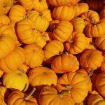 The Muck:  Pumpkin Plushie Workshop