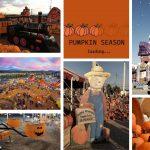 Pumpkin Patch at OC Fair Grounds