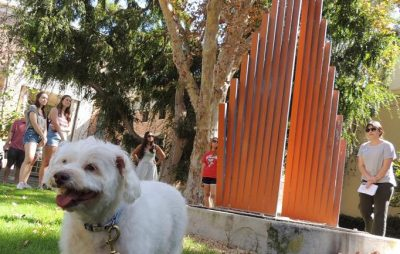 Chapman:  Art/Dog Walk
