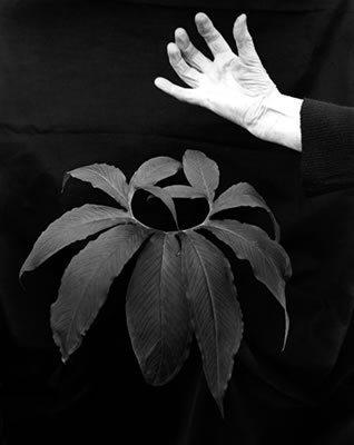 Seen & Unseen Photographs by Imogen Cunningham