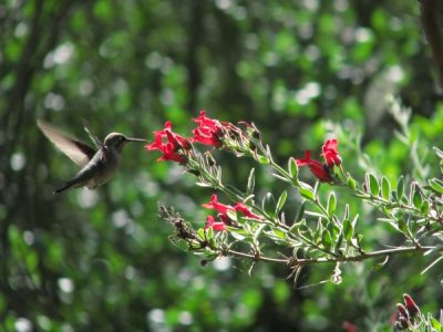 Hummingbird Walk