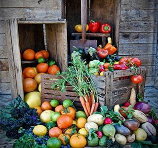 My Edible Garden with Steve Hampson