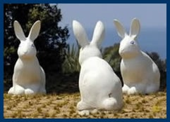 Bunnies and Books Festival