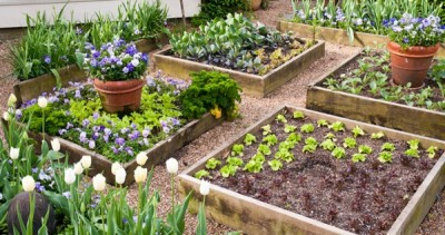 Raised Bed Demonstration with David Rizzo