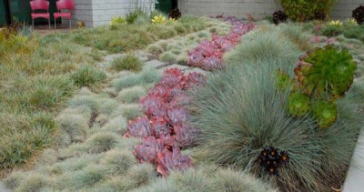 Reimagining your Lawn with David Fross