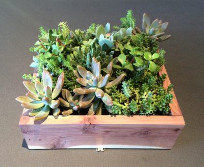Creative Ventures: Succulents