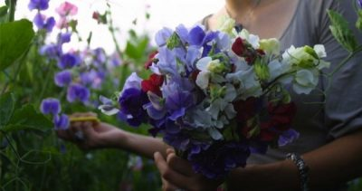 A Garden for Cutting with Dalia Brunner