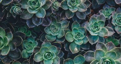 Succulent Seminar with Tracy Wankner