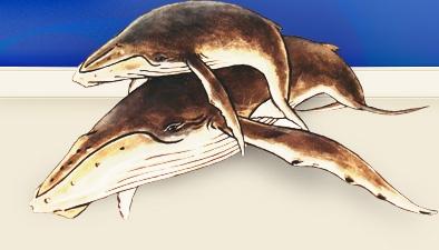 Surfers for Cetaceans
